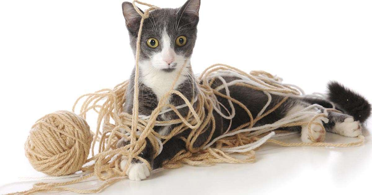 kitten tangled in yarn