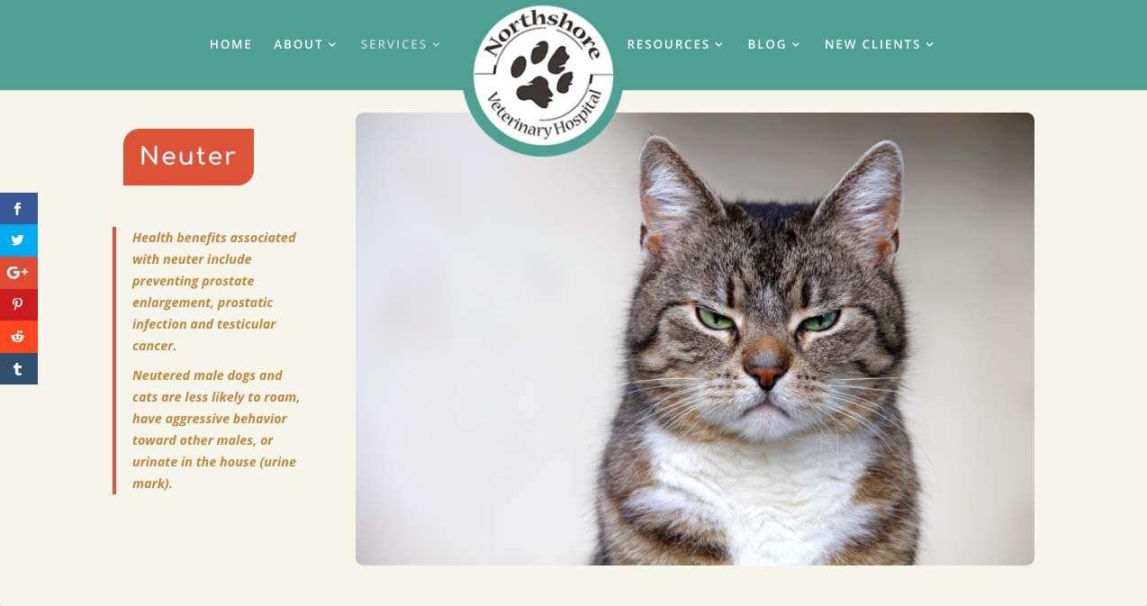 screen shot from northshore vet website design project, bellingham wa