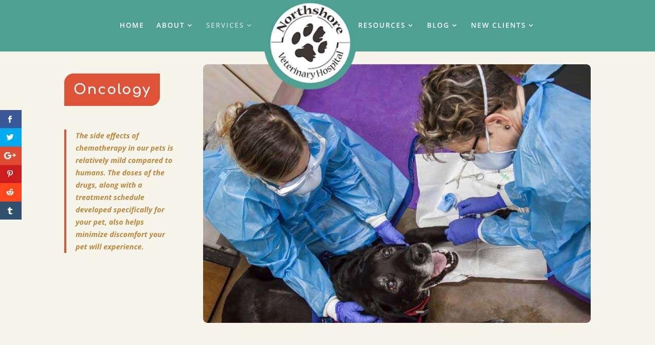 screen shot from northshore vet website design project